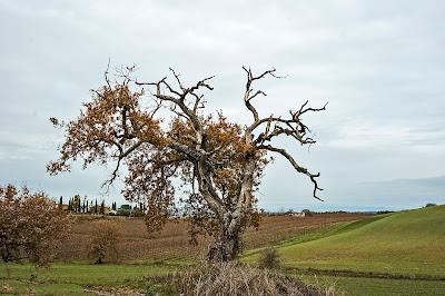 L'albero e la sua anima