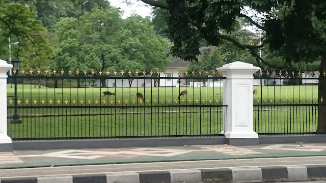 President Palace Bogor, Abandoned Deer Grazing - Image: Author