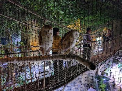 Совы в зоопарке Дубае