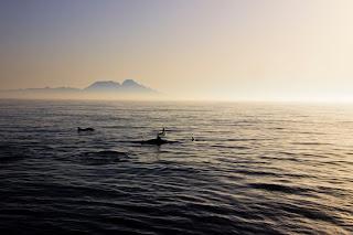 Rif, atardecer, delfines en el estrecho
