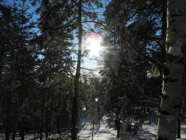 Зима, лес, солнце