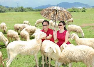 Cừu giống ninh thuận