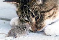hoşgörü, kedinin fareyi hoş görmesi