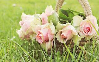 Bouquet rose di colore rosa bello