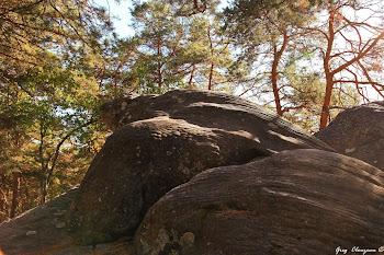 La Tortue Luth de Franchard, Fontainebleau
