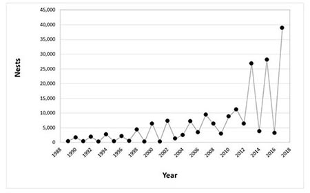 Green Sea Turtle Nest Count History