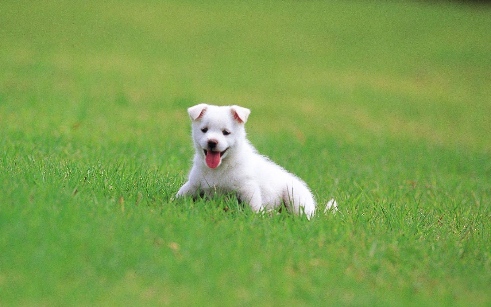 Hình nền chó con ngộ nghĩnh đáng yêu
