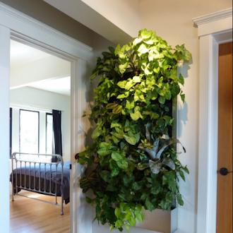 3 Inspirasi Renovasi Taman dalam Rumah