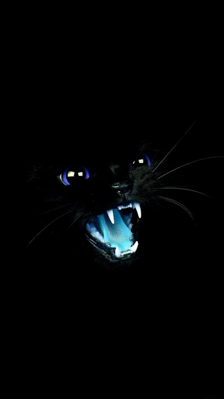 Cute Cat With Yellow Eyes Animal Wallpaper Wallpapers Lock