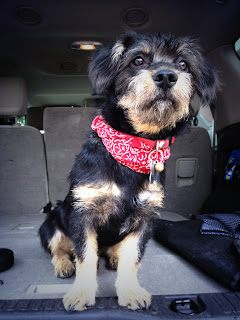 perro callejero adopta no compres