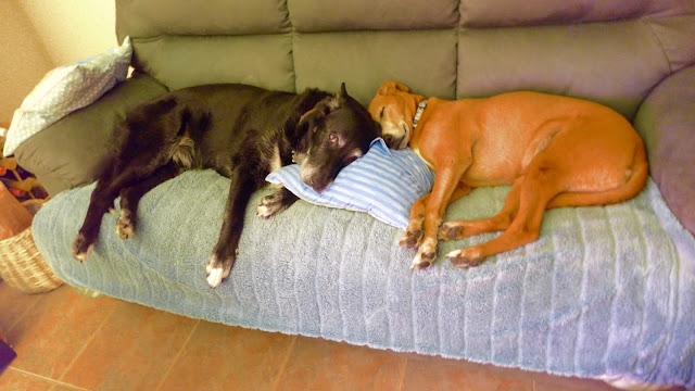tow dogs sleeping on a couch