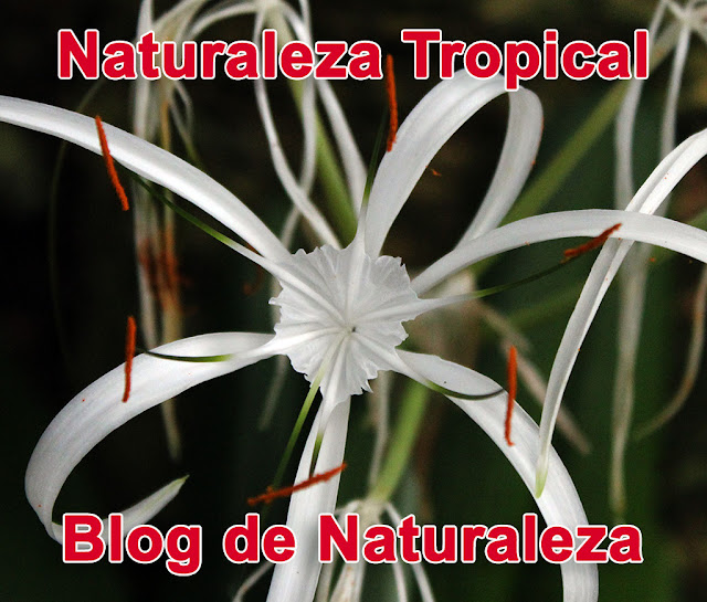 Blog Naturaleza Tropical