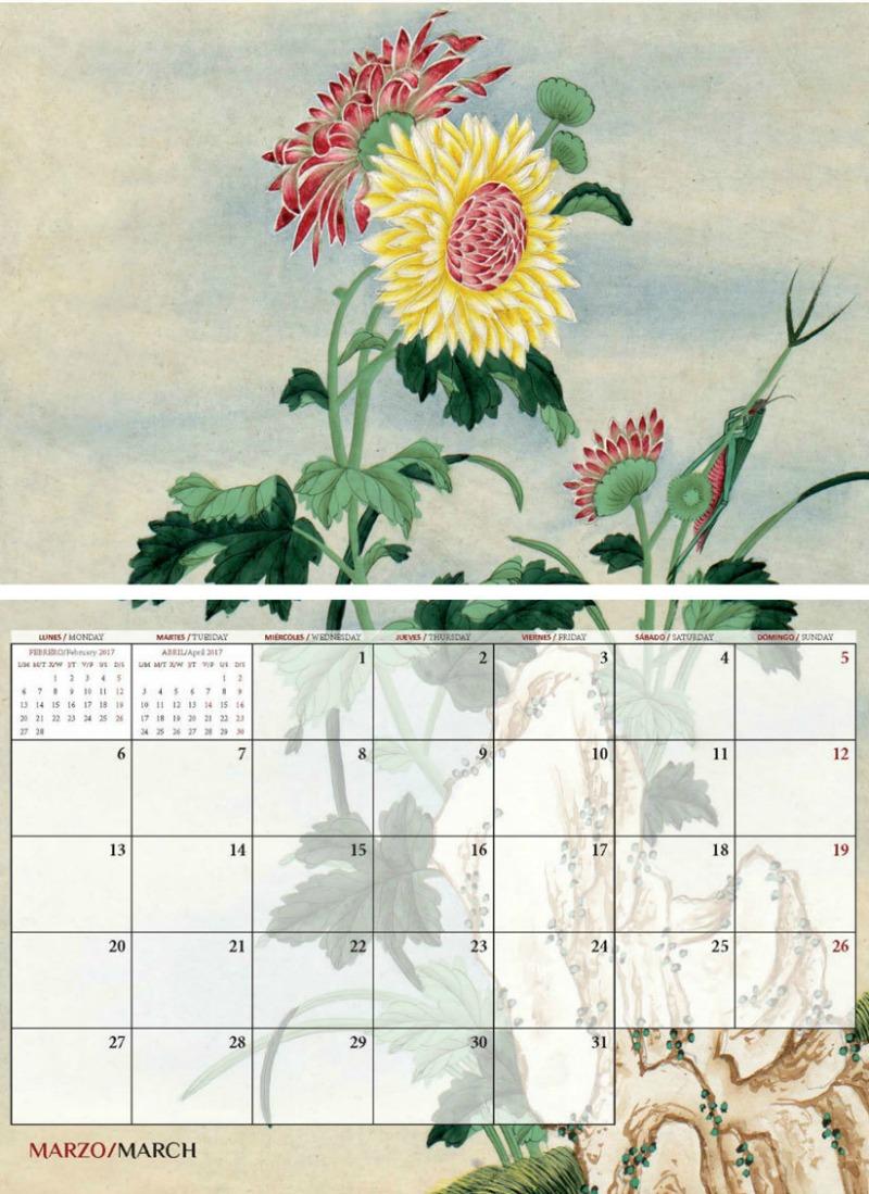 Ilustración botánica de Chrysanthemum morifolium