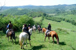 Collina e cavalli