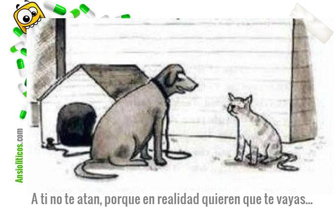 Chiste de Animales: Perros contra Gatos