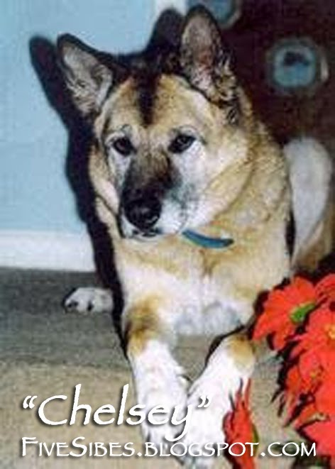 Our Dear Chelsey  ~ RIP 2007