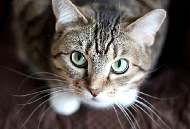Arti Mimpi Kucing melihat dikejar diikuti menggendong mati hitam putih