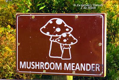 Mushroom Meander