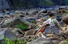 Beginilah Hasil Sampah Kalau Dibuang Sembarangan Ke Sungai