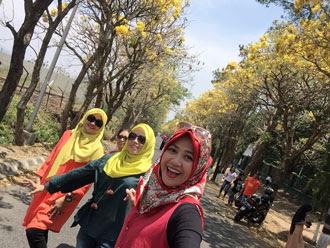 tabebuya; bonsai tabebuya; umur tabebuya berbunga; usia tabebuya berbunga; tabebuya beracun; umur berapa tabebuya berbunga; berapa lama pohon tabebuya tumbuh; bunga tabebuya magelang; perbedaan tabebuya dan sakura; sakura di indonesia; sakura di malang; tabebuya malang; tabebuya surabaya; tabebuya kuning; tabebuya ungu; tabebuya pink; tabebuya bondowoso; tabebuya putih; tabebuya merah; tabebuya chrysotrica; tabebuya pendem batu