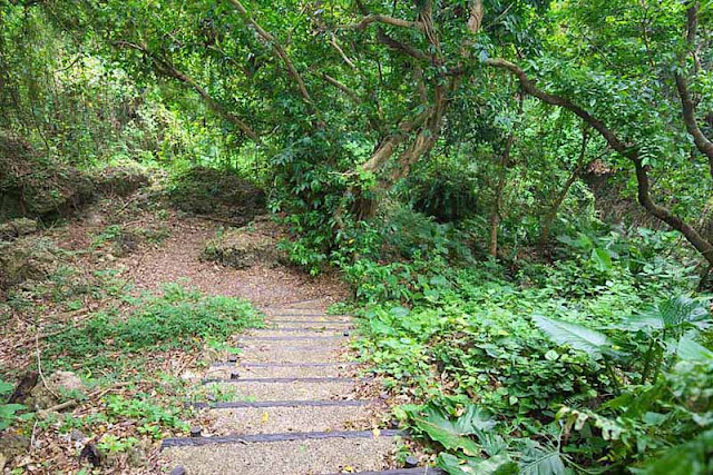 Horohoro Forest, park, trail, Okinawa, woods, stairs