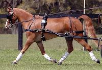 Koşum atı ve kayış takımı