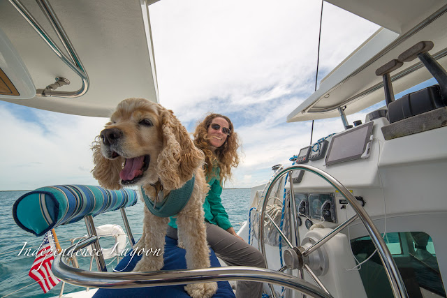 Boat dog and Lucy helming their Lagoon 380 sail catamaran