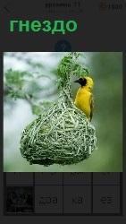 подвешено гнездо на ветке и сидит на нем птица желтого цвета