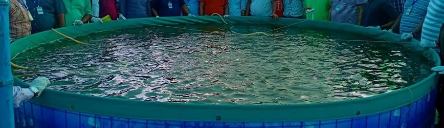बायॉफ्लोक (Biofloc) मछली पालन की विधि