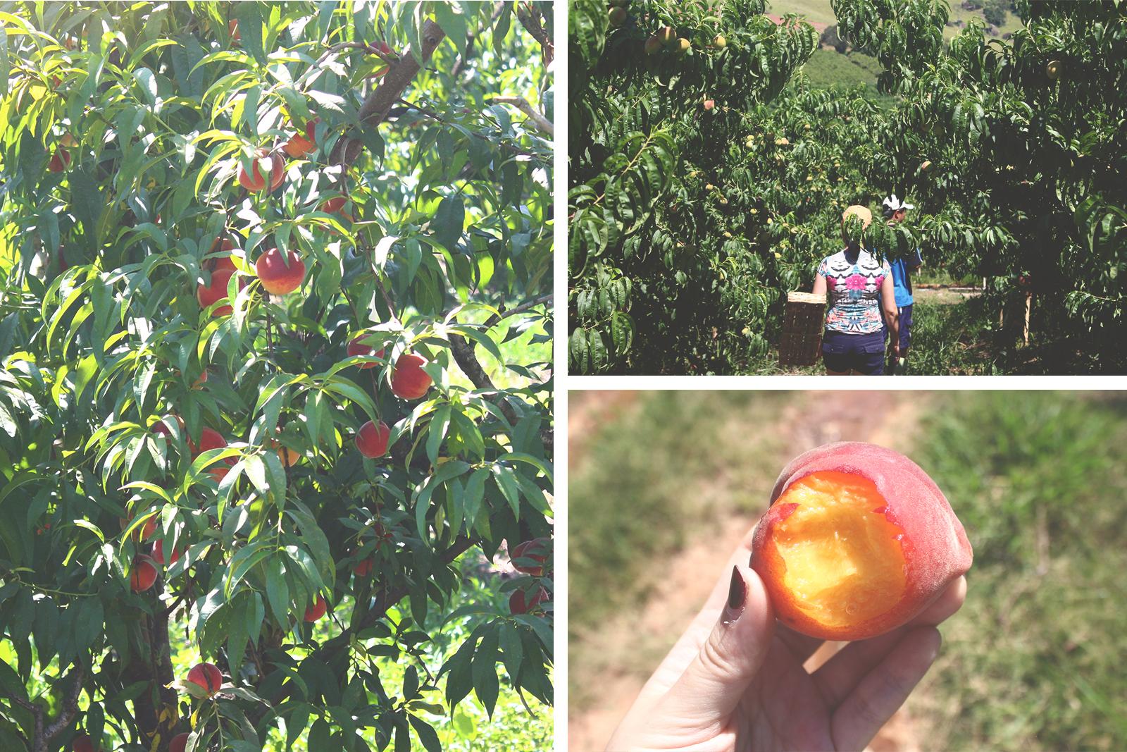 frutas pessegos