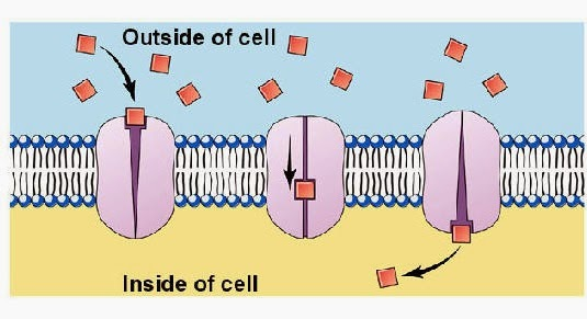 # 25 Passive and active transport across cell membranes ...