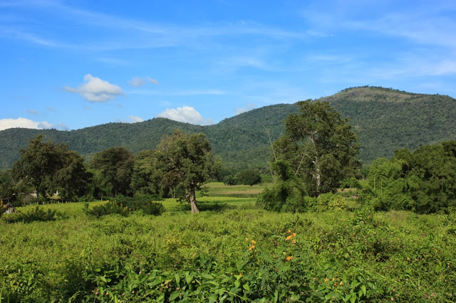 A view of the forested south-western slopes of BRT tiger reserve, Punajur wildlife range near Chamarajanagar town in southern Karnataka