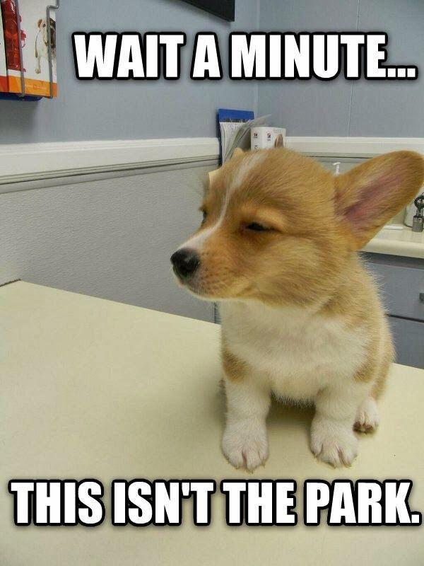 Funny Puppy Memes - Kenzie the Fuzzbucket
