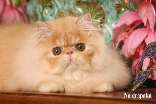 Kastracja czy sterylizacja kotów?