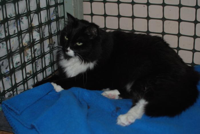 Lucy Cat 94