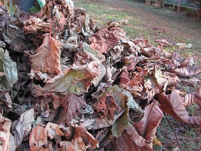 Pacciamatura con foglie