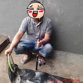 Master Essen Ikan Mas Harian