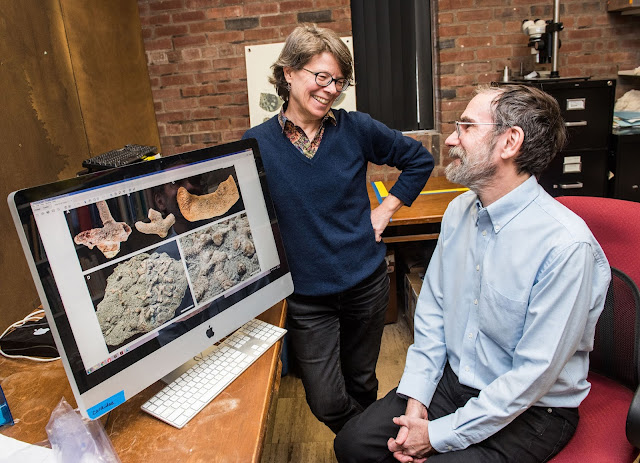 Bryozoan fossil fills missing evolutionary link