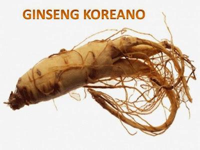 ginseng coreano para combatir la esterilidad masculina