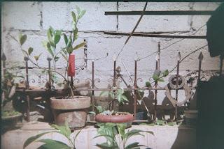 Plant pot - Holga 135bc