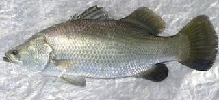cara memasak ikan kembung, cara memasak ikan laut asam pedas, cara memasak ikan laut bumbu kuning, cara memasak ikan laut bumbu pedas, cara memasak ikan laut yang enak, cara memasak ikan laut yang lezat,