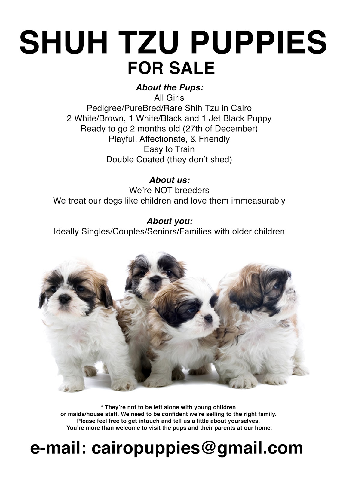 puppy for sale flyer templates - shih tzu puppies for sale flyer info