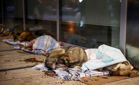 Sokak Hayvanları İçin Kış Aylarında Neler Yapabiliriz