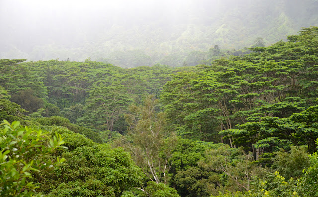 Maunawili Trail, O'ahu, Hawaii