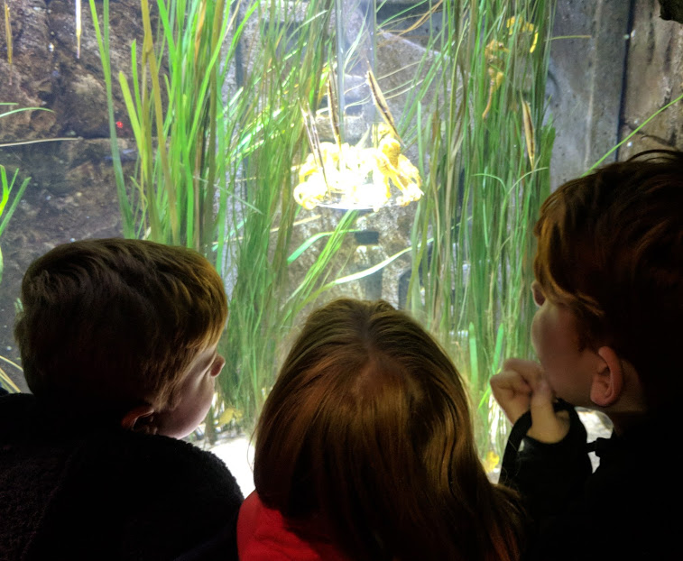 10 reasons I love my Family & Friends Railcard - SEA LIFE LONDON Seahorses