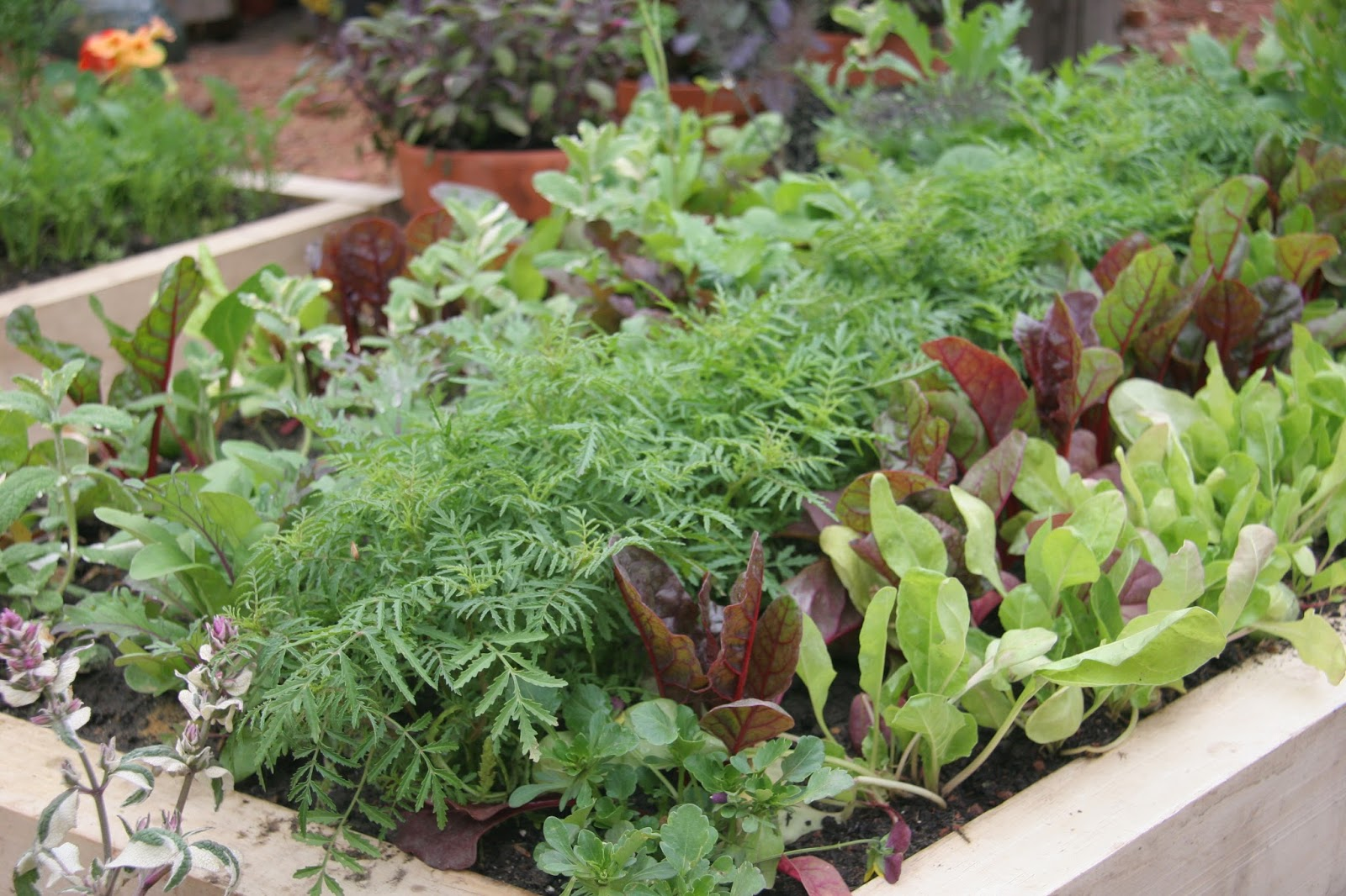 Vegetable Plants Available Now