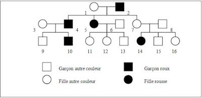 génétique humain exercice 2
