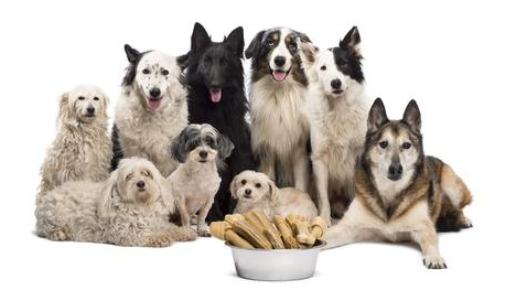 Basic Principles In A Dog Lovers Club