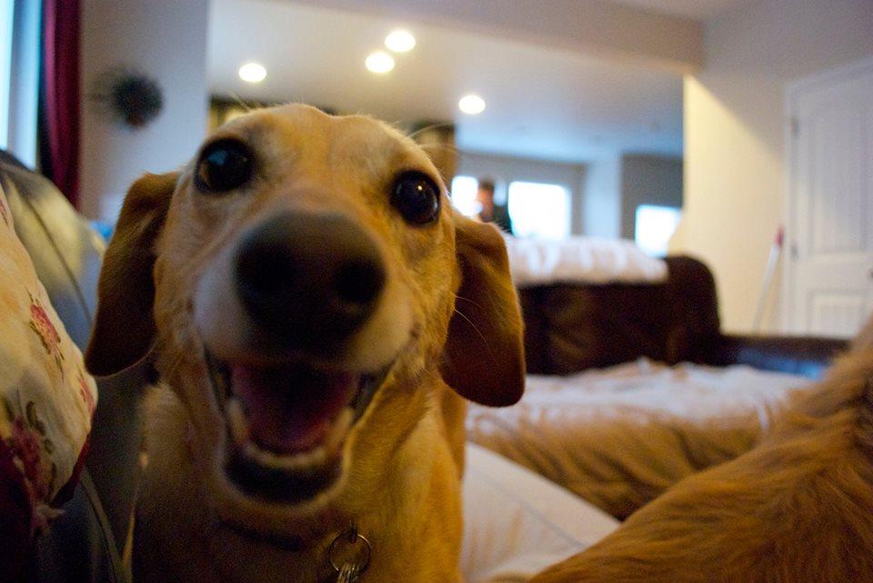 Cute dogs - part 119, cute dog album, funny dog phtos, funny dog gallery