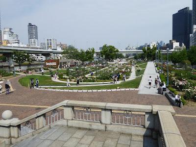中之島公園のバラ園